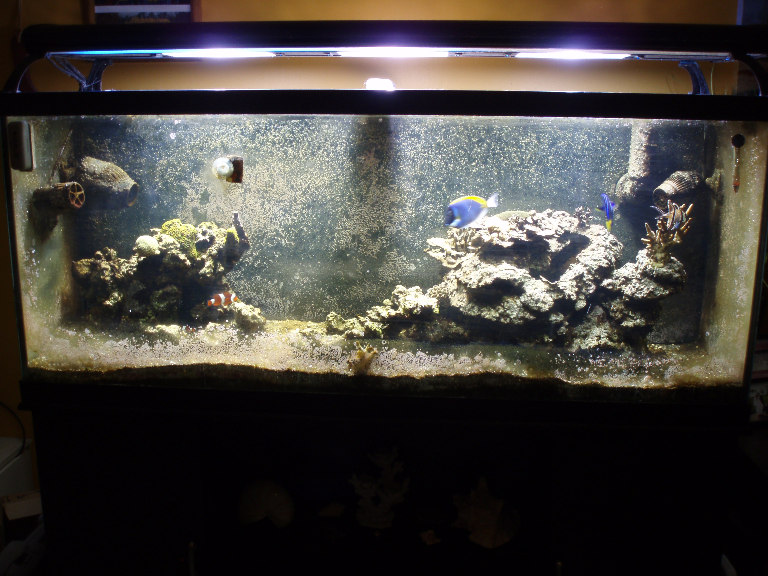 120 gallon salt water fish tank 1500 or best offer the for Best fish for reef tank
